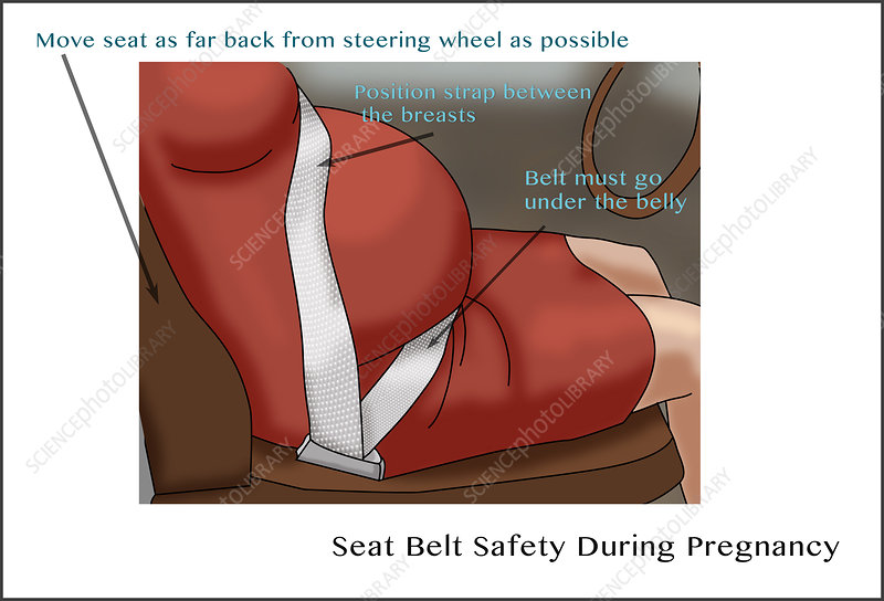 C0306643-Seat_Belt_Safety_during_Pregnancy,_Illustration.jpg